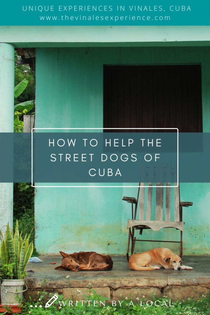 Cuba street dogs