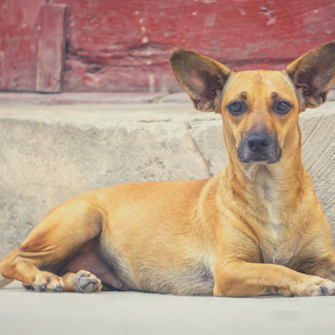 cuba street dog